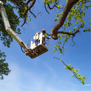 tree pruning Naches, WA
